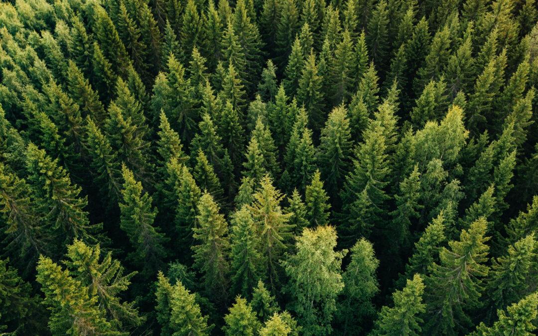 Aseguramos el futuro del bosque